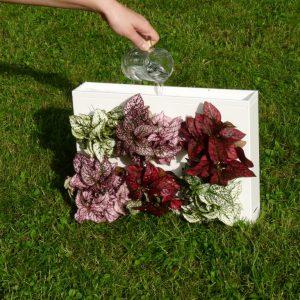 Rostliny vsaďte do obrazu a zalijte sklenicí vody do horního žlábku