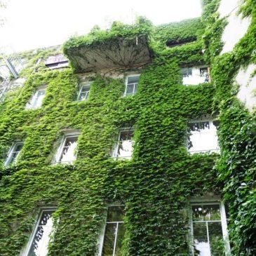 Navštívili jsme – exkurze zelené střechy a stěny (Vídeň)