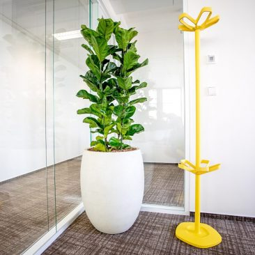 Solitérní zeleň v IT firmě, Praha